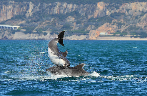 Portugal's Wolves & Dolphins - A Photographic Tour - photo#9