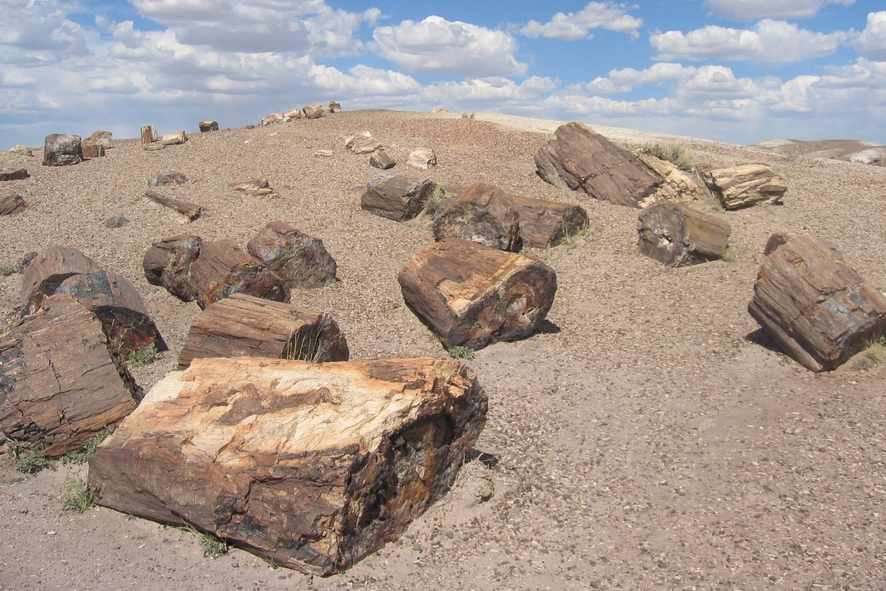 Arizona - Petrified Forest