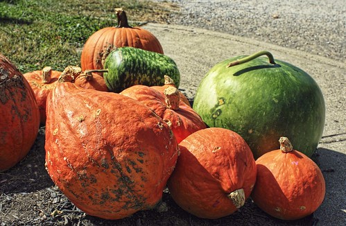 Cider Mill Visit: Squashes Galore!