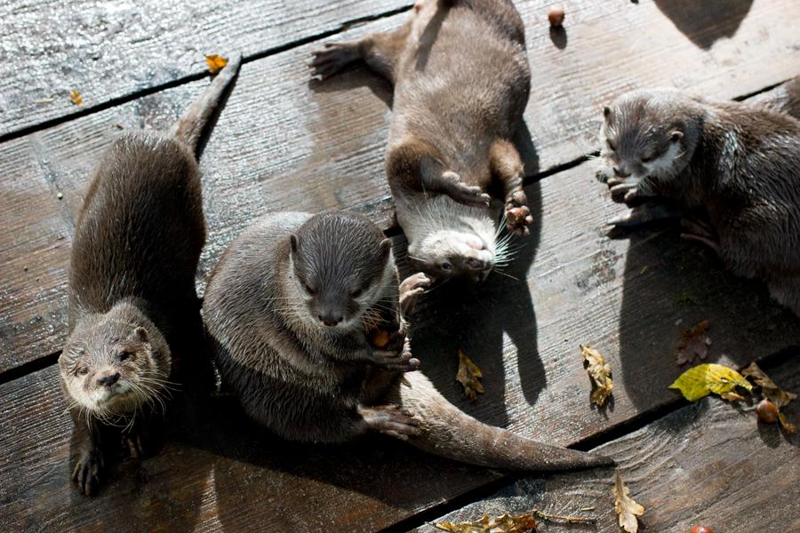 dierentuinamersfoort (7 of 8)