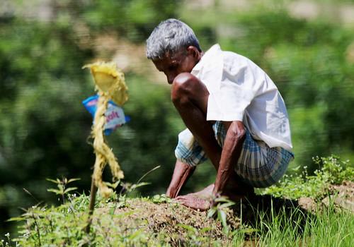 srilanka people farming farm paddy field paddyfield man