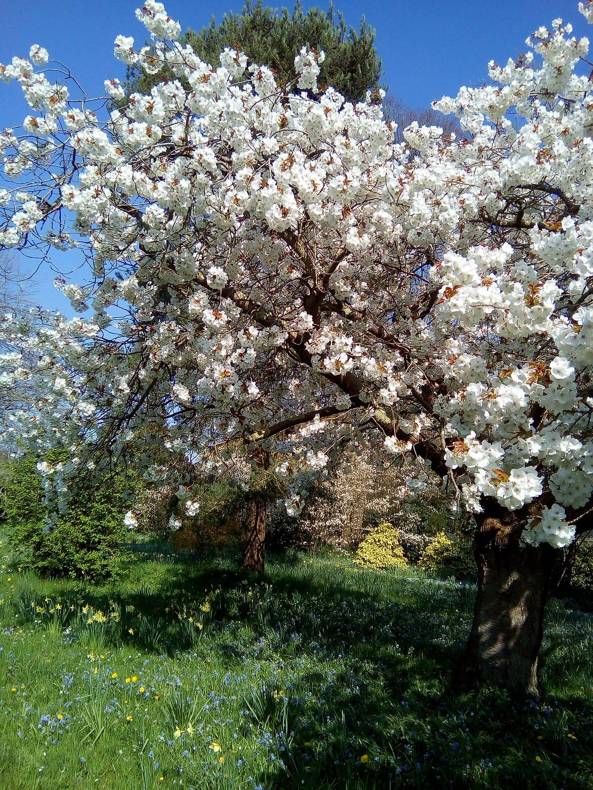 Blossom Batemans