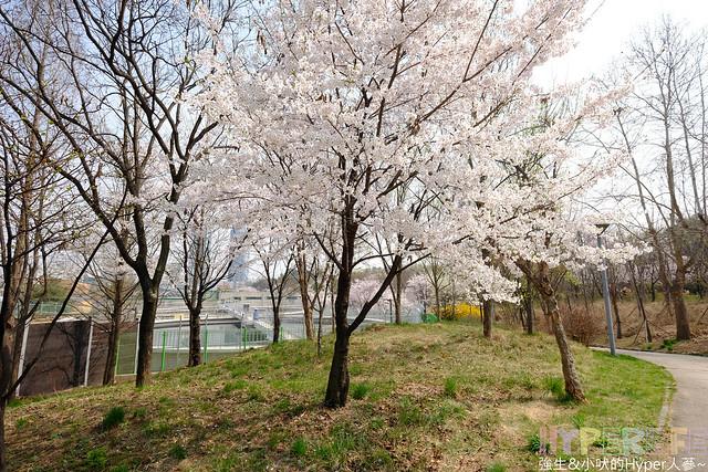 首爾林seoul forest (20)