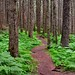 Beautiful path in the woods is the Denver Glacier Trail by paul.trottier
