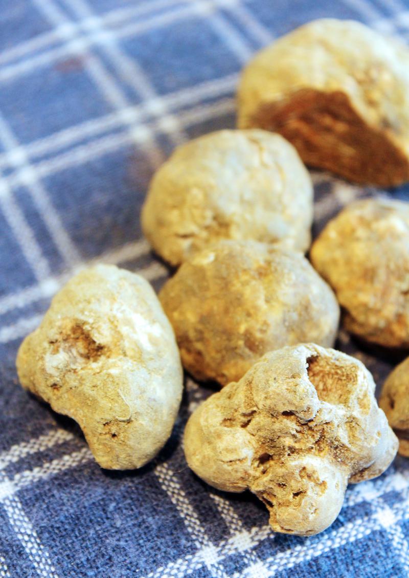 San Miniato Tuscany white truffle