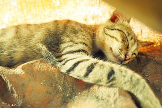 Short nap