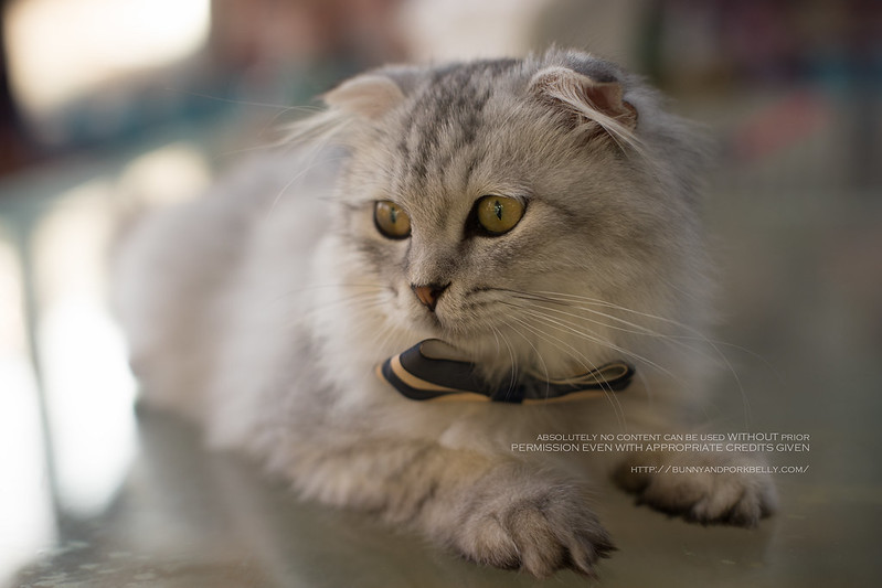 Cat Cafe 北京猫小院猫主题咖啡西餐 Beijing China