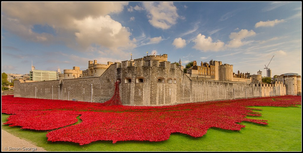 Tower Of London Poppy River Of Blood - Tower of london river of poppies