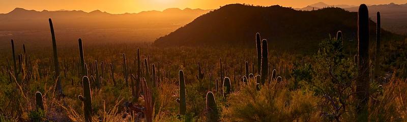 Cactuses - Saguaro National Park