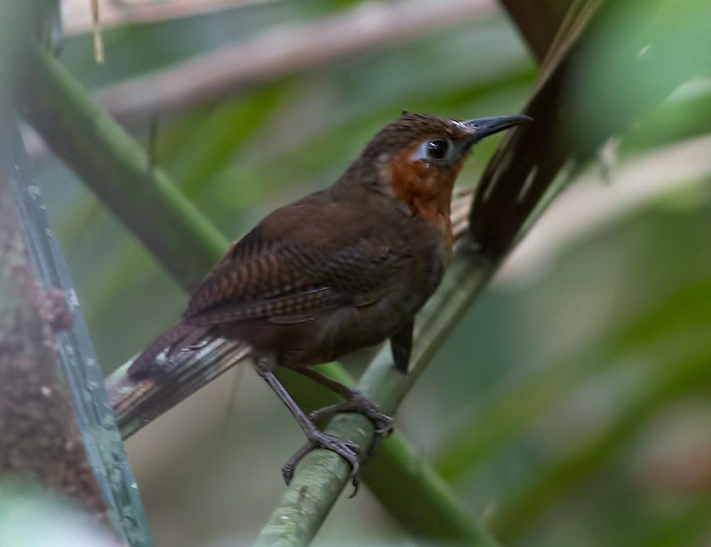 Panama Rainforest Discovery Center Panama Tripcarta