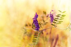 purple - yellow - autmn