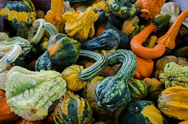 The Gourd Hoard