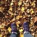 sneakers & leaves