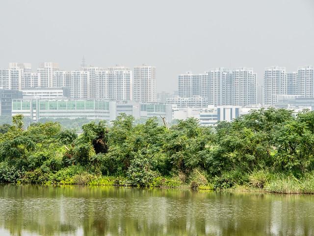 Mai Po Nature Reserve