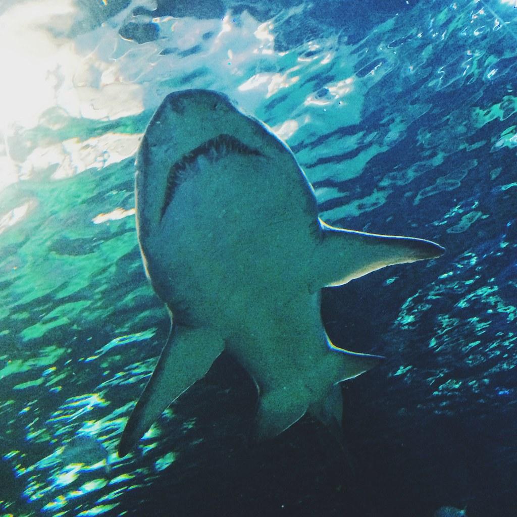 Akvariumet i Sydney