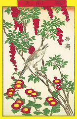 Heavenly bamboo, Indian chrysanthemum and brown-eared bulbul