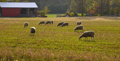 sun ontario barn nikon sheep farm marley d610 balderson 24120