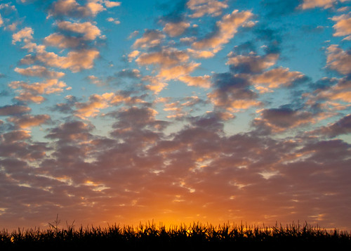 09-30-14 Sunrise Over Corn Field
