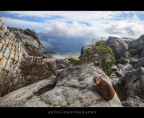 sea mountain nature rock photoshop canon southafrica bay rodent rat sandstone view cloudy tripod foggy landmark capetown aerial hyrax ef hdr tablebay tablemountain cs3 rockhyrax dassie 1635mm 3xp photomatix f28l tonemapping tonemap 5dmarkii 5dm2