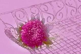 One Single Pink Aster - Digital Artwork