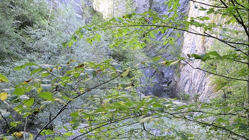 tree forest canon landscape geotagged schweiz switzerland nikon wasser suisse hiking che landschaft wald baum wandern schlucht forst broc nikonshooter cantondefribourg nikonschweiz geosetter d5300 capturenx2 ponte1112 nikonswitzerland nikkor18200vrll viewnx2 geo:lat=4660551605 geo:lon=711892605