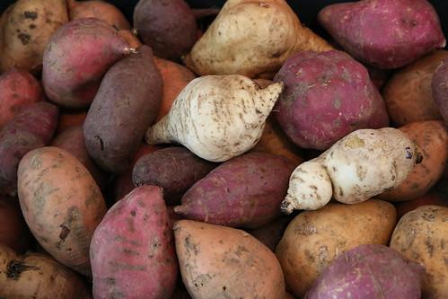 糧食的基因多樣性至關重要。(來源:Global Crop Diversity Trust)
