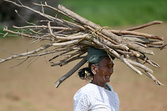 Woman collecting wood for cooking