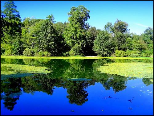 lake newyork reflection brooklyn image prospectpark dmitriyfomenko fall12014