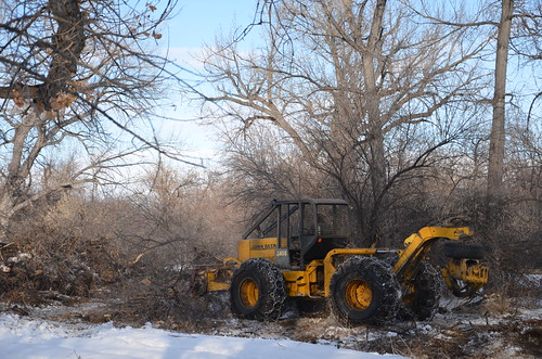 With fully grown Russian olives, heavy machinery is needed to remove them. NRCS photo.