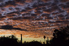Tucson Sunset