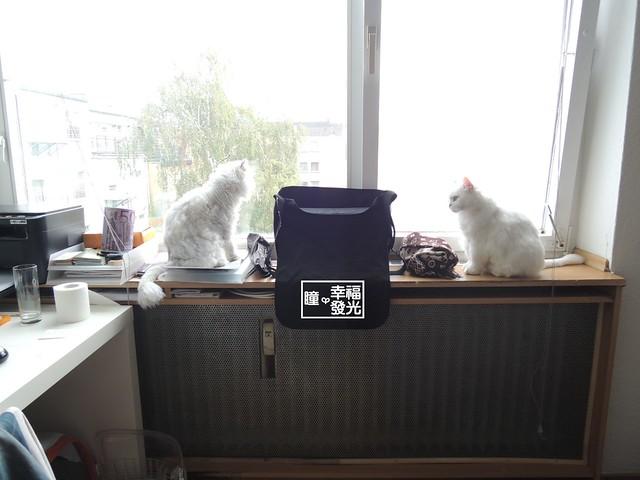 20140930-04-bothCats (57)