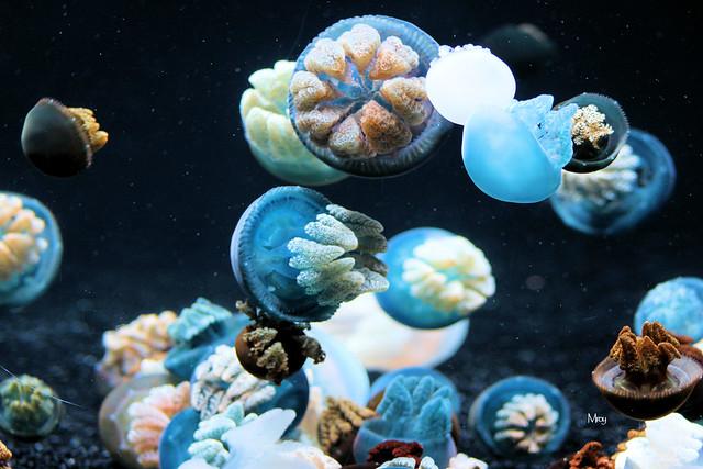 monterey bay aquarium 147