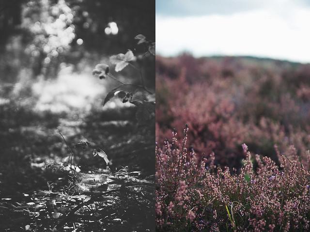 septemberhike_collage4