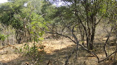 SACON - Coimbatore - Forest Trail