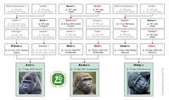 Gorilla Family - Warsaw (2014)