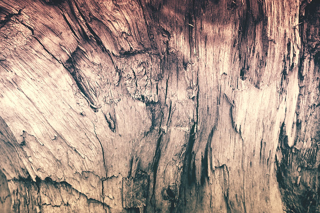 Free HD Photo : High Quality Wood Texture for Web Background or Header