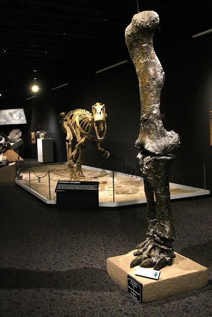 Mesalands Dinosaur Museum