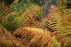Explosion of ferns