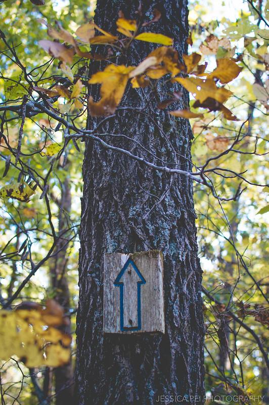 sign tree hike hiking trail