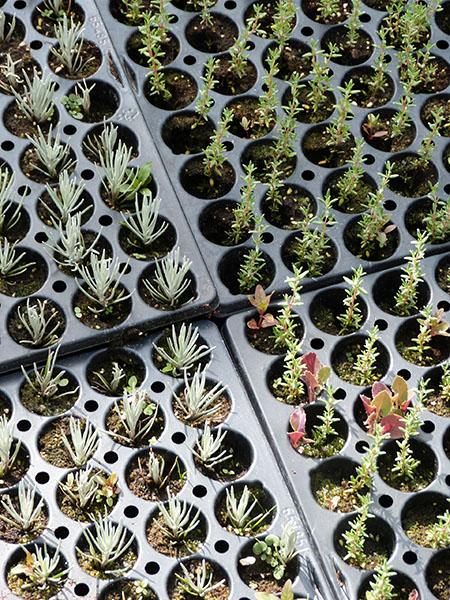 bébés plantes
