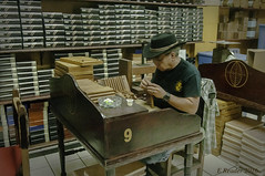 Cigar Maker in Little Havana
