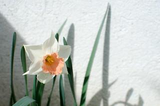 Backyard in Spring 13