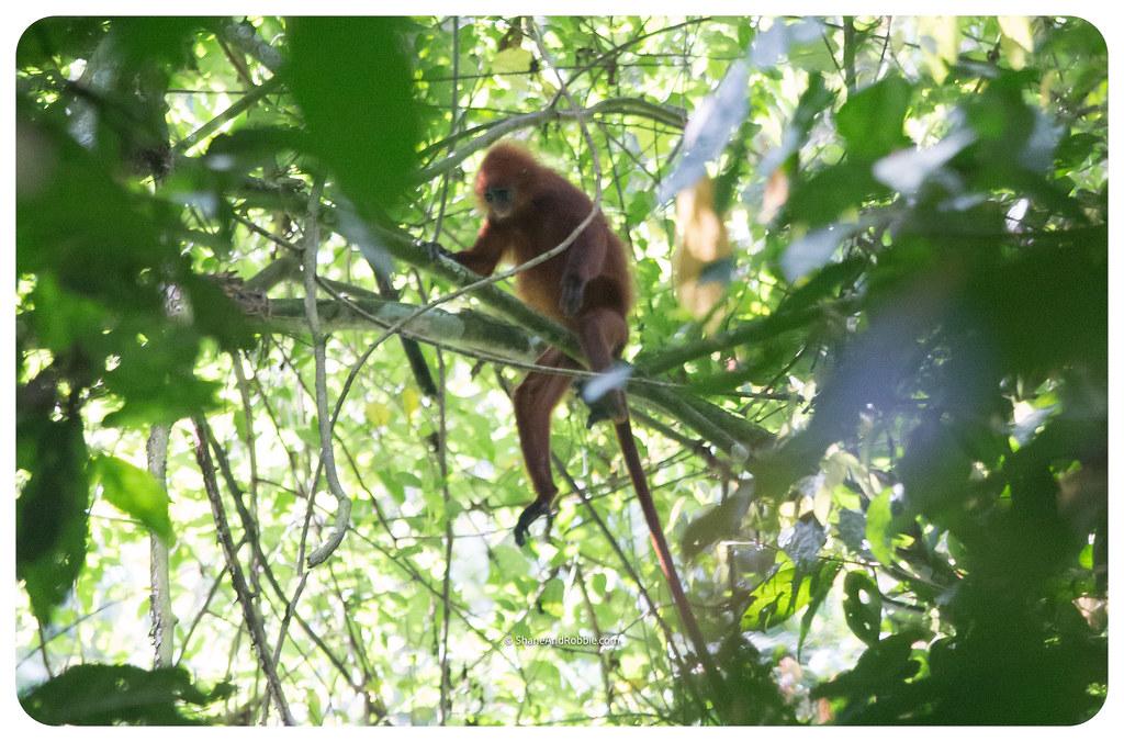Borneo-20170412-_MG_7847