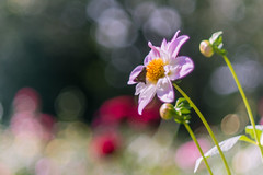 21092014_in the light