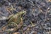 Frog 2014-09-30 (IMG_0402)