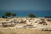 argeologische opgravingen - archaeological site cyprus