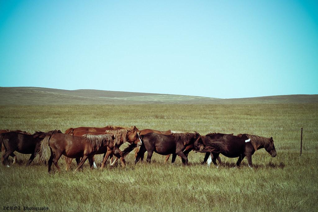 內蒙古‧印象1841-18-2.jpg