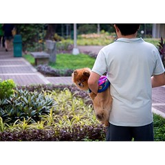 A boy and his dog. Yes, the dog has a jumper on. Salcedo - 2013 #manila #themeoftheweek #totw #salcedo #puppylove #puppygram #childhood #street