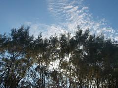 Δεντρα-Trees