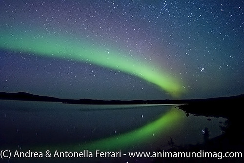 reefwondersdotnet posted a photo:	Northern Lights reflecting in the waters of Wolf Lake, Nunavik tundra, Quebec, Canada